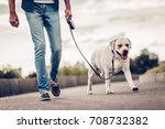 Stock photo cropped image of handsome young man with labrador outdoors man on a walk in the city with his dog 708732382