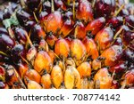 close up oil palm fruits. | Shutterstock . vector #708774142