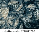 green leaf pattern with vintage ... | Shutterstock . vector #708785206