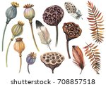 Set Of Feathers  Poppies  Seeds ...