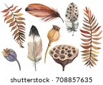 Set Of Feathers  Poppy  Lotus ...