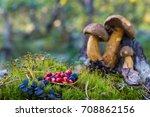 mushrooms in the forest | Shutterstock . vector #708862156