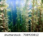 underwater flora. underwater... | Shutterstock . vector #708920812