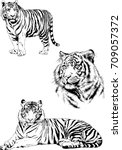 set of vector drawings on the... | Shutterstock .eps vector #709057372