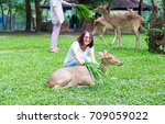 woman feeding deer on lawn in... | Shutterstock . vector #709059022