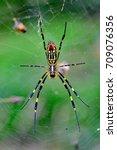 Small photo of Nephila clavata / Arachnida