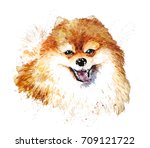 watercolor artistic orange dog... | Shutterstock . vector #709121722