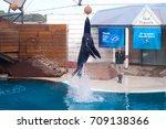 sydney australia   august 12 ... | Shutterstock . vector #709138366