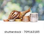 brown snail climbing  the pile... | Shutterstock . vector #709163185