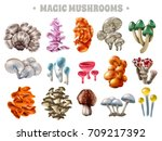 set of magic mushrooms of...
