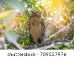 a wise owl perching and looking ... | Shutterstock . vector #709227976