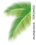 Leaves Of Palm Tree On White...