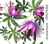 passionflower tropical flowers... | Shutterstock .eps vector #709270582
