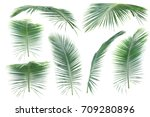 leaves of coconut on white... | Shutterstock . vector #709280896