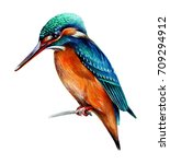 Bird Kingfisher Painted In...