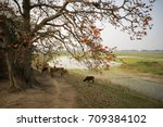 vietnam landscape. blossoming... | Shutterstock . vector #709384102