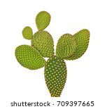 Opuntia Cactus Isolated On...