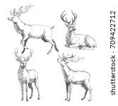 Set Of Forest Deers. Vector...