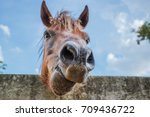horses are eating food on a... | Shutterstock . vector #709436722