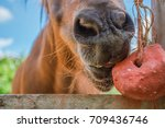 horses are eating food on a... | Shutterstock . vector #709436746