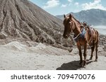 horse on mount bromo volcano ... | Shutterstock . vector #709470076