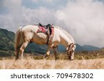 horse on savanna field at bromo ... | Shutterstock . vector #709478302