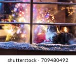 on christmas night a lovely cat ... | Shutterstock . vector #709480492