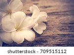 beautiful plumeria or temple... | Shutterstock . vector #709515112