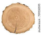 cross section of ash tree trunk ...   Shutterstock . vector #709530595
