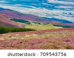 beautiful summer landscape of... | Shutterstock . vector #709543756