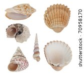 Sea Shells Isolated On White...