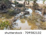 Many Uprooted Trees And Pile O...