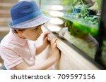 little kid boy admire different ... | Shutterstock . vector #709597156