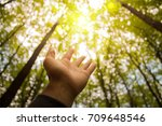 the hand reaches for the sun ... | Shutterstock . vector #709648546
