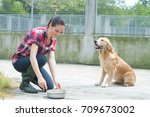 dedicated girl training dog in... | Shutterstock . vector #709673002