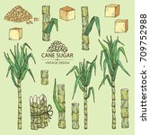 collection of  sugarcane  cane...   Shutterstock .eps vector #709752988