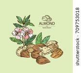 background with almond  almond... | Shutterstock .eps vector #709753018