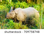 side view of endangered one... | Shutterstock . vector #709758748