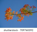 brilliant red and orange... | Shutterstock . vector #709760392