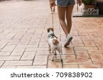 Stock photo young woman and her dog during walk in the city street 709838902