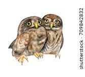 owls. the chicks hug. lovely... | Shutterstock . vector #709842832