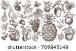 fruits and berries. set of... | Shutterstock .eps vector #709845148