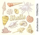 seashells hand drawn aquatic... | Shutterstock .eps vector #709862536