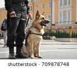 smart police dog sitting...   Shutterstock . vector #709878748