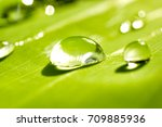 dew on leaves | Shutterstock . vector #709885936