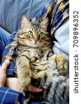 Stock photo cat at home 709896352