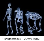 Set Of Three Skeletons Isolate...