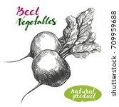 beet vegetable set. detailed... | Shutterstock .eps vector #709959688