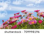 flowers in the landscape | Shutterstock . vector #709998196