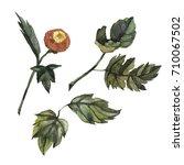 wildflower aster flower in a...   Shutterstock . vector #710067502